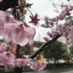 春分の日ですね